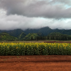Waialua, Oahu North Shore Hawaii